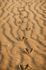 Footsteps in the Sand (fluer-photos.com) Tags: sonnenaufgang spuren strand urlaubjesolo jesolo venetien italien it