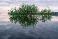 Water mirror (alex_dredd) Tags: water minimal minimalism morning mirror atmosphere advantures nature landscapes landscape travel trees tree russia river freedom grace summer sunrise nikon