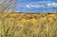 7DWF - Saturday - Landscapes (Chris Scopes) Tags: 7dwf saturdaylandscapes sefton coast ainsdale southport
