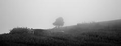 Remoteness (MacMyc) Tags: za afrika africa swaziland swazi bw blackandwhite monochrome exterior nature wild wildness landscape fogscape shadow isolation calm mist sobantu daytime canon700d
