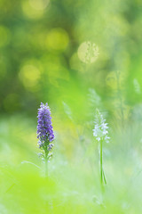 FP2017__16_9023.jpg (Fernando.P.Photo) Tags: orchidees proxy flower nature ngc