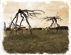 Under muddy skies, rusted Root creatures extend iron tentacles at each other and the battle begins between these Sentient sculptures forged long ago on the Red Planet.... (dqpagan) Tags: cellphone story mythic metal iron buckscounty sculpture