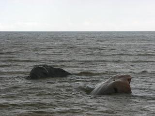 Gulf_of_Riga-Rain_and_stones