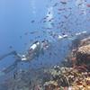 Puerto Galera Images Philippines (Badladz) Tags: puertogalera badladzscubadiving underwaterworld scubadiving