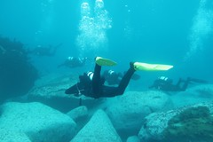 Diving with fantastic 20m visibility at Bondi (sarah.handebeaux) Tags: bondi visibility sam diving fantastic july