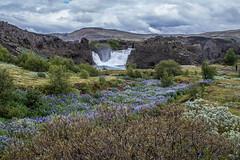 Hjálparfoss (icecold46) Tags: hjálparfoss suðurland southiceland waterfall nature iceland þjórsárdalur