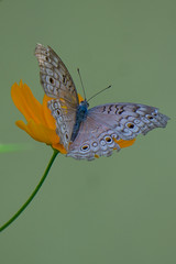 DSC02802 (explorewithez) Tags: nature birds butterflies flowers floraandfauna