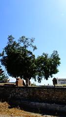 DSC08245 (omirou56) Tags: 169ratio sonydscwx500 sky tree shadow efpalio greece ελλαδα ευπαλιο δεντρο ουρανοσ σκιεσ outdoor psp