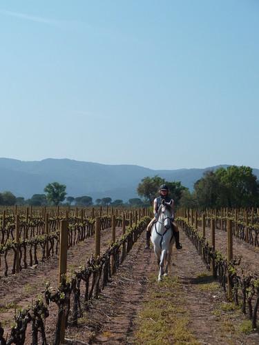Balade à cheval dans les vignes