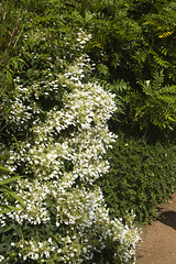 2017-06-18 Virginia Water Savill Gardens IMG_9139 (Darkstar Moody) Tags: virginiawater savillgardens plants flowers trees water ponds lakes wildlife gardens flora fauna