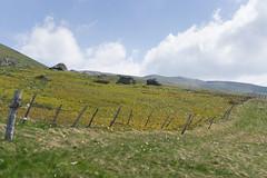 frontière naturelle (pabloleberger1) Tags: paysage sancy montagne dégradés courbes couleurs