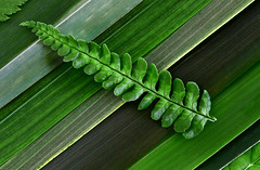 Shades Of Green (andycurrey2) Tags: smileonsaturday gogreen nature natural fern grasses flora plants leaves pattern stilllife arrangement art colours shades tones textures