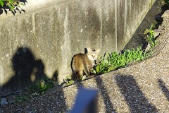 Today's Cat@2017-06-19 (masatsu) Tags: cat thebiggestgroupwithonlycats catspotting pentax mx1