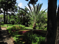 The President's Garden (RIch-ART In PIXELS) Tags: funchal park madeira portugal canon flowers trees flora flowering palmtree lushy path
