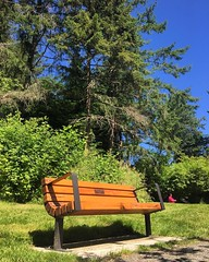 """And with that, the last of the memorials are done. Today we had the bench my grandfather requested dedicated in his honor. """"Add years by walking"""" says the man who made it to 91. . . . #memorial #bench #emilycarrpark #dedication #park #canada #canada150 ## (ClevrCat) Tags: ifttt instagram and with that last memorials done today we had bench grandfather requested dedicated his honor addyearsbywalking says man who made it 91 memorial emilycarrpark dedication park canada canada150 yyj victoria bc walk activeliving exercise"""