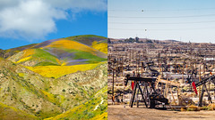 Carrizo Plain National Monument & Oil Fields East of Temblor Range (Gary Rides Bikes) Tags: california carrizoplain carrizoplainnationalmonument mckittricksummit northamerica sanluisobispocounty springtime temblorrange usa beautyinnature goldcolored idyllic inbloom landscape mountainridge nature nopeople plain remote scenicsnature vibrantcolor yellow oil pumpjack oilfield