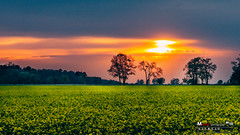 by Martin K... (one-Shot by Martin K...) Tags: canon eos 70d 50mm 14 sunset sonnenuntergang natur nature awesome f14 landscape landschaft deutschland germany sachsenanhalt color