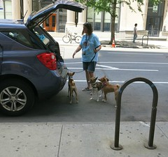 New York Colours - Four Dogs on 5th Avenue (Pushapoze (nmp)) Tags: newyorkcity westvillage 5thavenue dogs chiens houses maison tourists car voiture walls greenwall