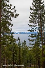 Lake Tahoe (Anna Calvert Photography) Tags: laketahoe nevada lake california trees nature landscape snow snowcappedmountains northtahoe tahoesouth sierranevada freshwaterlake scenery