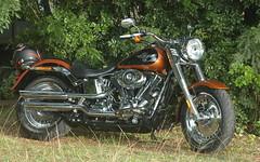 Harley Davidson (shelley.sparrow) Tags: harleydavidson bike shelleysparrow brisbane queensland australia nikon motorbike wheels reflections helmet cruise classic harley freedom