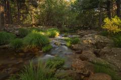 Sol y sombra. (Amparo Hervella) Tags: rascafria comunidaddemadrid españa spain paisaje río agua roca árbol largaexposición d7000 nikon nikond7000 comunidadespañola