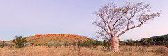 The Kimberley Icon (Louise Denton) Tags: boab tree westernaustralia cliff escarpment red outback sunset pink dusk magenta warm kimberley gibb river road nt northern territory greatnorthernhighway australia timber creek