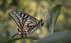 Wings (shashin62) Tags: seoul korea sthkorea southkorea forest seoulforest