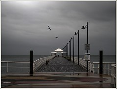 Birds over peir. (agphoto100) Tags: olympus c5060 peir jetty water sea schorncliffe brisbane wood wooden path concrete dark wet rain birds seagull clouds gray day frame