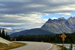 Around the Corner - Icefields Parkway, Jasper - Canada (André-DD) Tags: cans2s canada kanada urlaub vacation alberta herbst fall autumn outdoor clouds mountain landscape hill mountainside jaspernationalpark parkway sonne sun nationalpark bäume baum tree trees serene mountains berge berg wolken wolke cloud natur nature icefields sky jasper forest strase road street roadsign strasenschild icefieldsparkway