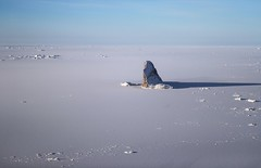 95197933 (Paulo Heroncio) Tags: bestpix nasa government climatechange ice bridge arcticocean gre inflight greenland grl