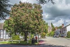 Black and White Shropshire Village (tramsteer) Tags: tramsteer tree village shropshire church clouds postbox litterbin england dilwyn herefordshire