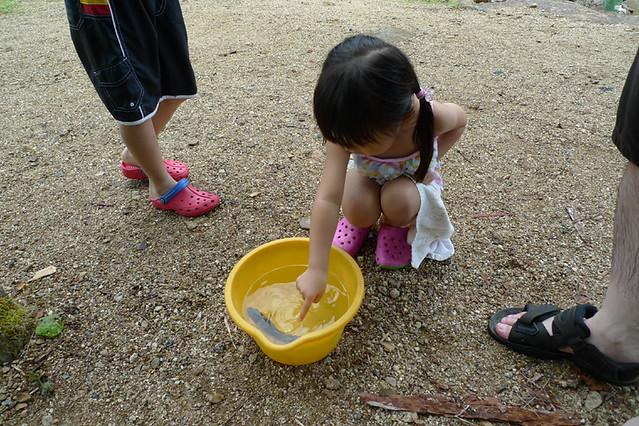 どうにかやっと1匹つかまえたヤマメ|赤沢森林資料館