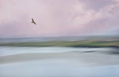 Whispering (Christina's World aka Chrissie Bee) Tags: icm intentionalcameramovement water scenic bird flying flight hawk birdofprey lagoon landscape creative painterly sky sunset pink peaceful california delmar sandiego coastal ethereal evening summer fishing