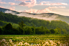 dandelion field at foggy sunrise in mountains-171706 (1) (M. Pellinni) Tags: ifttt dropbox dandelion field flower spring background summer grass nature meadow beautiful lawn rural idyllic plant season foggy ridge landscape forest mountain mysterious outdoor hillside haze mist agricultural sky cloud hill bouquet scenic gorgeous spectacular epic weather dramatic tree country environment cloudy springtime countryside suburban tranquil misty agriculture scenery plantation fog morning