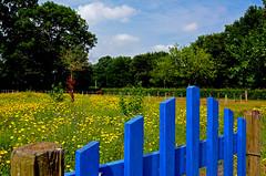 Landscape Flowers (JaapCom) Tags: jaapcom landscape flowers paardebloemen flowering fleurs flower natuur nature dutch holland wezep