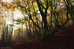 Mystic morning (Hector Prada) Tags: bosque otoño árbol hojas momento mágico sol niebla bruma luz forest autumn tree leaves magic moment sun light fog mist mystic paisvasco basquecountry