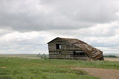 Partially-collapsed barn (Canadian Pacific) Tags: alberta canada canadian rural countryside 2017aimg9467 farm barn collapsed leaning plains prairie prairies abandoned
