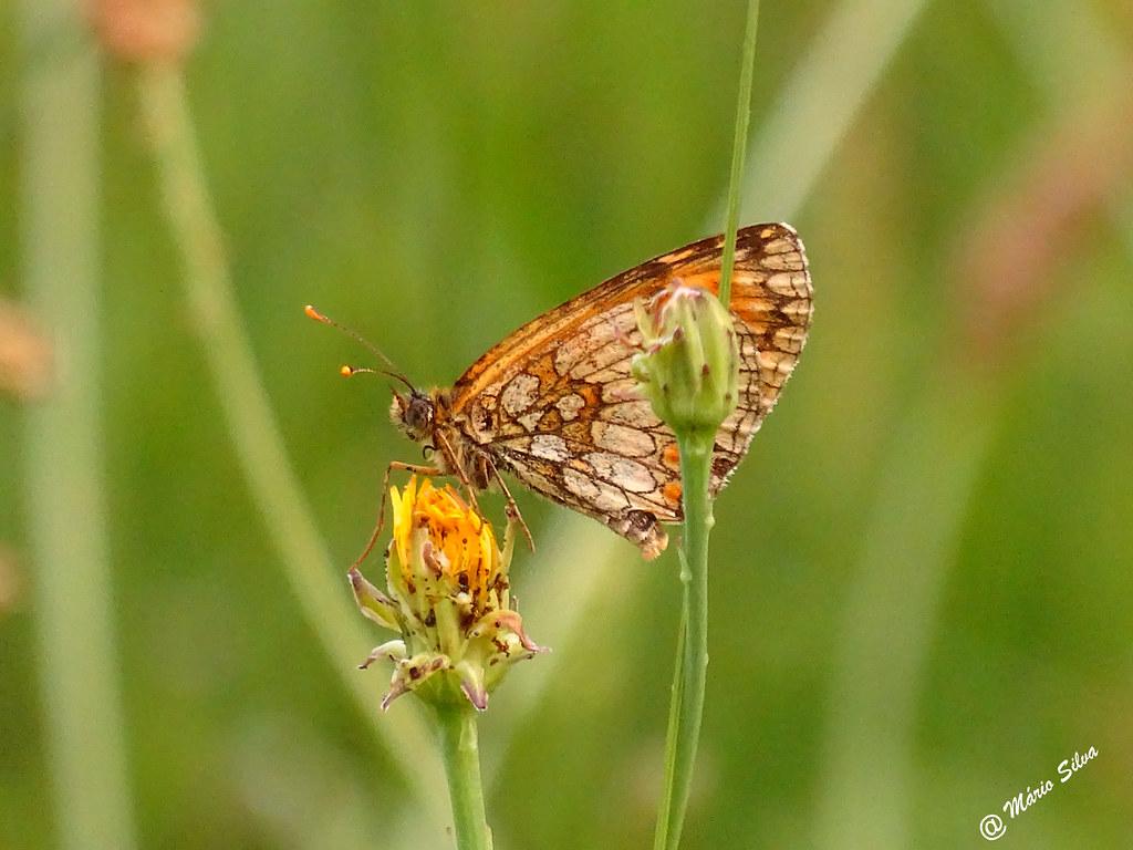 Águas Frias (Chaves) - ... A borboleta e a flor ...