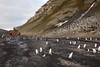Chinstrap Penguin Highway, Bailey Head, Antarctica (Scott Ableman) Tags: shetlandislands baileyhead chinstrappenguins chinstrappenguin chinstrap penguin nationalgeographicexpeditions lindbladexpeditions nationalgeographicorion antarctica