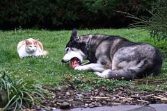 Proxémie (renécarrère) Tags: chien chat chienchat dogcat dog cat