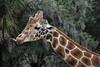 (Anythuing) Tags: nature naturephotography photography photo wild wildlife wildlifephotography animals animalphotography amateur amateurphotography florida nikon d7200nature d7200 specanimal