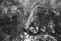 Molinos de Zamanes, Vigo (Foxspain Fotografía) Tags: lucroit lucroitlandscape landscape paisaje foxspain foxspainfotografia vigo molinos molinosdezamanes bosque nature seda led ledphotography longexposure longexposureday filtros nd filtrosnd galicia