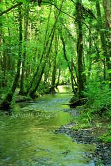 Tintern Stream (Ken Meegan) Tags: tinternstream tinternwoods tinternabbey saltmills cowexford ireland 1762017 stream wood trees