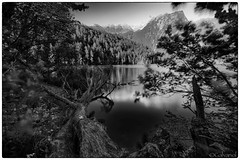 Blue Turns Into Grey (galvanol) Tags: acherkogel austria oetztal piburg tirol tyrol alps blackwhite blackandwhite bw forest galvanol lake nature water