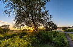 Summer Morning (nicklucas2) Tags: tree flare bracken sun sunrise rockfordcommon newforest landscape mist