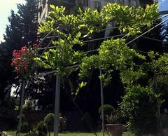 Nutsubidze Plato, Tbilisi, Georgia (Anna Gelashvili) Tags: nutsubidzeplato tbilisi georgia тбилиси грузия ნუცუბიძისპლატო თბილისი საქართველო ფოთლები leaf