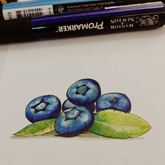 Blueberries (magdalenabiedermann) Tags: blueberries promarkers copic draw drawing painting fruit nature flora