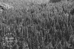 Yosemite 16 WM (Mariana Warne) Tags: yosemite national park canon canon6d california sunnycalifornia southerncalifornia nature naturallight landscape mountain pines pinetrees bluesky falls trip marianawarne signofspring spring sunshine sandiego sandiegophotographer escondido escondidophotographer
