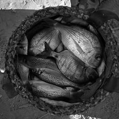 Fish Basket (Bert Pot) Tags: analog analogue filmphotography film kodak negativ reportage streetphotography travelphotography documentary bertpot kodaktrix trix bnw monochrome blackandwhite rollei rolleiflex 6x6 mediumformat tlr planar zeiss square squarephotography fish basker maroc marocco casablanca