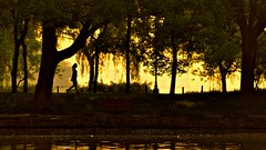 Gold Morning (Marie.L.Manzor) Tags: sunset sun forest trees backlight lake water reflection silhouette dof china light asia nikon d610 marielmanzor 1000favs 1000favorites